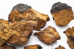 Chaga Mushroom Pieces stock image