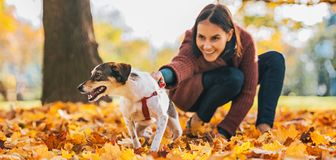 Closeup on cheerful dog and young woman holding it outdoors Royalty Free Stock Image
