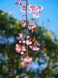 Closeup Cherry stock photos