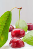 Closeup cherry fruit cream dessert Royalty Free Stock Image