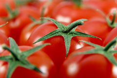Closeup of Cherry Tomatoes. Several fresh ripe cherry tomatoes filling the whole frame stock image