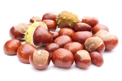Closeup of chestnut on white  Royalty Free Stock Image