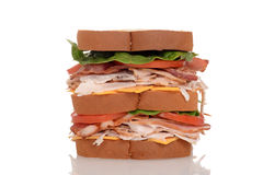 Closeup chicken club sandwich. With white background stock photos
