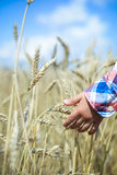 Closeup of child hand touching wheat spikes in Stock Photography