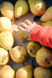 Closeup of child's hand taking pear. Store display full of red yellow fruits on box. Royalty Free Stock Photos