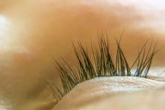 Closeup of children`s eyelashes, at a sleeping child. Delicate si. Closeup of children`s eyelashes at a sleeping child. Delicate silk lashes. Concept love Royalty Free Stock Image
