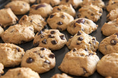 Closeup on chocolate chip cookies Royalty Free Stock Photo