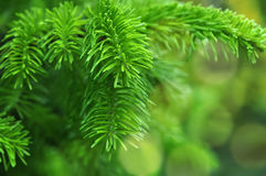 Closeup of Christmas-tree background Stock Photography