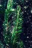 Closeup of Christmas tree background with falling snow. Merry Christmas and Happy Royalty Free Stock Photos