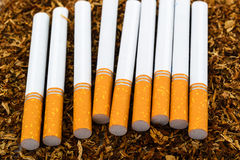 Closeup of cigarettes detail on tobacco background Royalty Free Stock Image