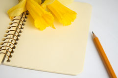Closeup of a clear notebook page and daffodils Stock Photography