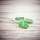 Closeup clover leaf . Royalty Free Stock Photography