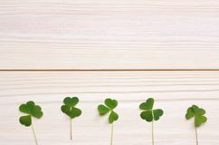 Closeup clovers leaves on white wooden background top view with copy space Royalty Free Stock Photo