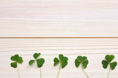 Closeup clovers leaves on white wooden background top view with copy space Stock Photography