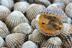 Closeup of cockles(scallop) for food background Royalty Free Stock Image