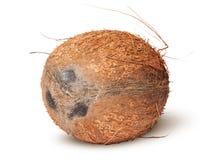 Closeup of coconut rotated Stock Photos