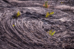 Closeup of cold lava pattern with plants. Patterns formed by a lava flow are bursting with new life as small green ferns grow in the cold lava in Volcanos Royalty Free Stock Images