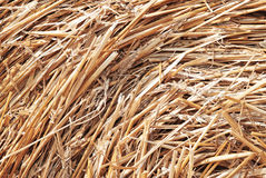 Closeup collected hay Royalty Free Stock Images