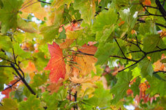 Closeup of colorful autumn tree Stock Photography