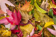 Colorful bright fall leaves on ground. Stock Photo