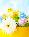 Colorful Easter eggs with chick. Closeup of colorful Easter eggs with chick toy in festive basket over blue sky background, traditional Christian celebration Royalty Free Stock Photography