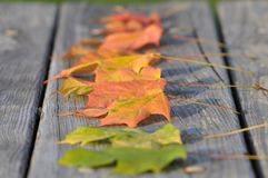Autumn foliage on wooden surface. A close up of colorful autumn foliage on a wooden surface royalty free stock photos