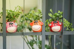 Closeup cute flowerpot in cow shape hang at iron fence background with sunlight. Closeup colorful flowerpot in cow shape hang at iron fence background with stock photography