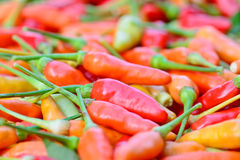 Closeup of  colorful fresh  peppers group Stock Photo