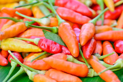 Closeup of  colorful fresh  peppers group Royalty Free Stock Photography