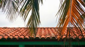 Closeup colorful image of palm tree hanging over spanish style roof Royalty Free Stock Image