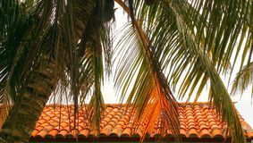 Closeup colorful image of palm tree hanging over spanish style roof Stock Photos