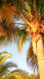 Closeup colorful image of palm tree under sunlight Royalty Free Stock Images