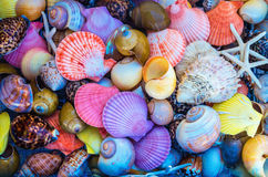 Closeup of colorful sea shells in different shapes. Greece coast Royalty Free Stock Photo