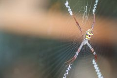 Free Closeup Colorful Spider On Cobweb With Copy Space Royalty Free Stock Photo - 109269925