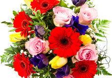 Closeup of colorful spring flowers Stock Images