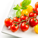 Closeup of colorful tomato on the vine Royalty Free Stock Images