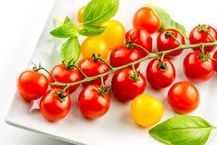 Closeup of colorful tomato on the vine Stock Photo
