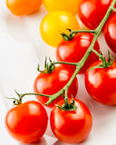 Closeup of colorful tomato on the vine Royalty Free Stock Photos