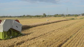 Closeup combine harvest wheat agriculture field storks stock video footage