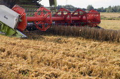 Closeup combine harvest wheat agriculture field Stock Images