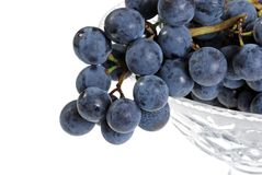 Closeup concord grapes Stock Photo