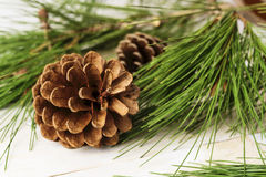 Closeup on conifer cones with pine tree branches Stock Images