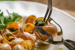 Closeup of consume snails fried in garlic sauce Royalty Free Stock Image