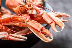 Closeup of cooked scampi with pincers Royalty Free Stock Photo
