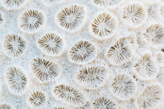 Closeup coral Stock Photo