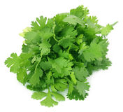 Closeup of coriander leaves Stock Photo