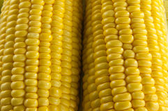 Closeup of Corn Stock Images