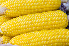 Closeup corn boil Stock Images