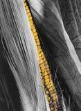 Corn cob, yellow on black and white royalty free stock photo