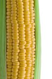 Closeup of corn cob isolated Stock Photos